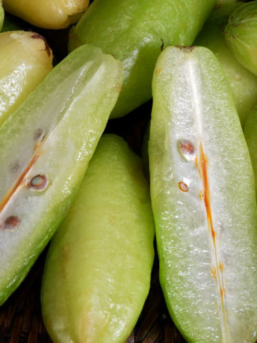 Cucumber Tree (averrhoa bilimbi) #AVE-BIL