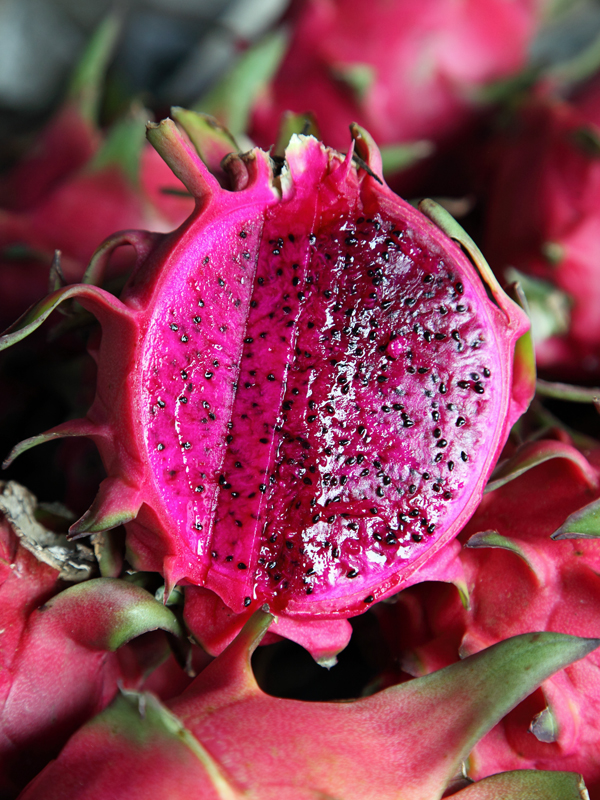 8 Plant, Dragon Fruit Cactus Mix (hylocereus) – Urban ...