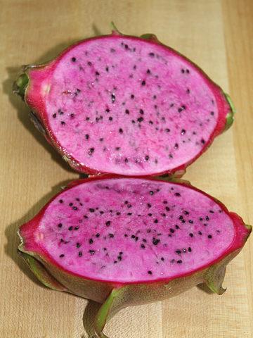 Lite Pink Dragon Fruit Cactus (hylocereus polyrhizus) #HYL-PUN