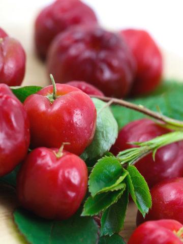 Acerola Cherry Tree (malpighia glabra) #MAL-GLA