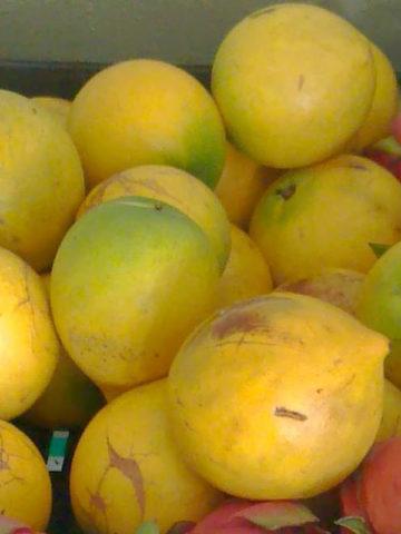 Abiu Tropical Fruit Tree (pouteria caimito) #POU-CAI