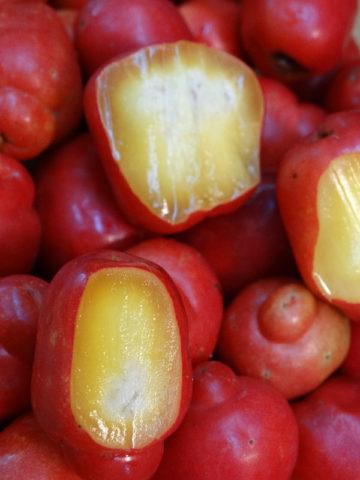 Red Jocote Mombin, Ciruela Huesito (spondias purpurea) #SPO-PUR